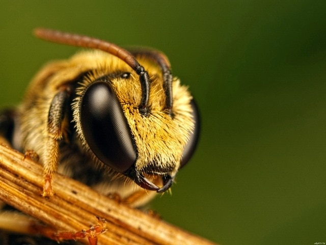 Bee-Compound-Eyes-Insects-Macro-Art-Huge-Print-Poster-TXHOME-D2447.jpg_640x640
