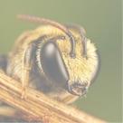 bee-square-136